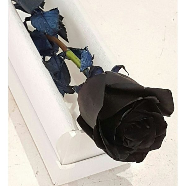 BLACK ROSE IN A DISPLAY BOX